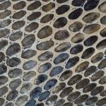Bej maro snake lac
