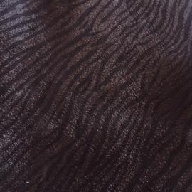 Maro lucios zebra