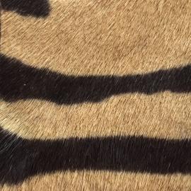 Ponei cu dungi animal print