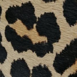 Ponei cu gherute negre animal print